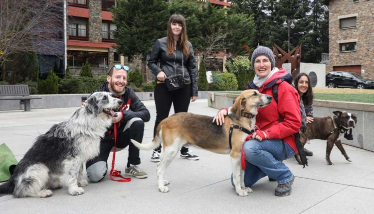 Participants de la OTSO Trail Dog Encamp