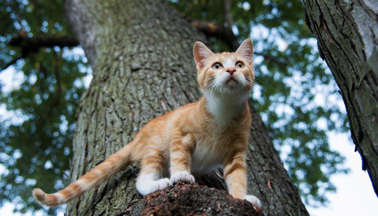 Adoptar un gat